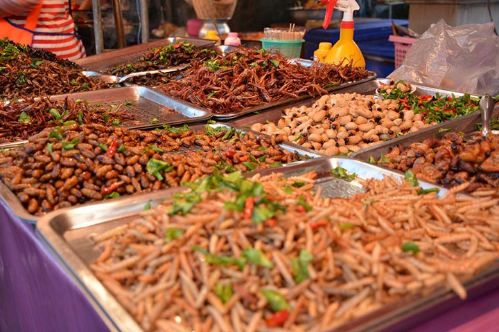 Insects at Sart Thai Festival