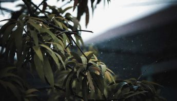 Rain in Khao Lak and lush green leaves